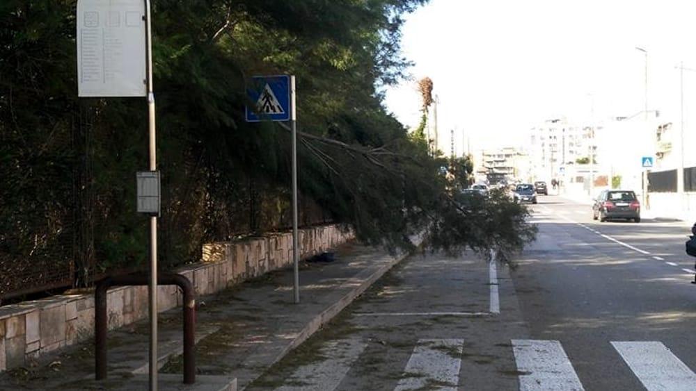 Vento forte su bari e provincia alberi caduti e danni 17 for Arredamenti bari e provincia